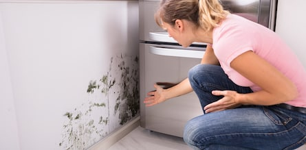 Mold Inspection Homecheckit Columbia Maryland